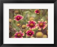 Wild Blooms II Framed Print