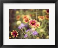 Wild Blooms III Framed Print