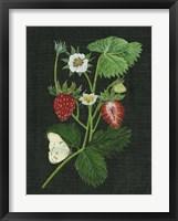 Framed Strawberry Fields I