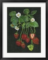 Framed Strawberry Fields II