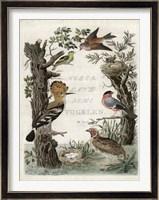Framed Woodpecker Sanctuary