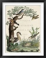Framed Duck Sanctuary