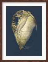 Framed Gold Foil Shell IV on Cobalt