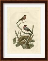 Framed Nozeman Birds & Nests  I