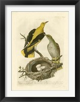 Nozeman Birds & Nests  II Framed Print