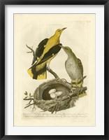 Framed Nozeman Birds & Nests  II