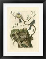 Nozeman Birds & Nests  III Framed Print