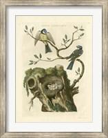 Framed Nozeman Birds & Nests  III