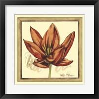 Framed Tulip Study II
