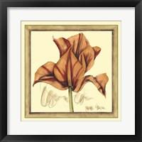 Framed Tulip Study IV