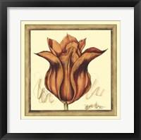 Framed Tulip Study VI