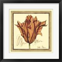 Framed Tulip Study VII