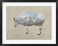 Framed Rocky Mountain Goat