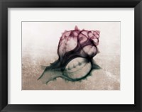 Framed Ombre Sea Shell X-Ray