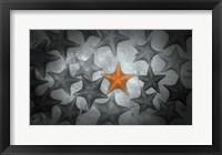 Framed Pop of Color Orange Starfish
