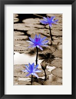 Framed Pop of Color Lotus Flowers