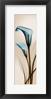 Framed Calla Lily L222