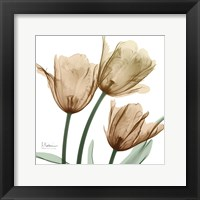 Framed Autumn Tulips 1