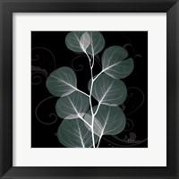 Framed Mint Eucalyptus