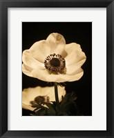 Framed Floral Closeup 1