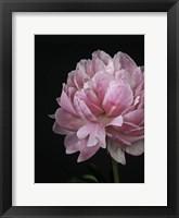 Framed Floral Closeup 4