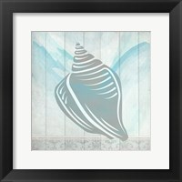 Framed Sea Shell 2