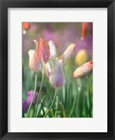 Framed Tulip Swim B