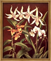 Framed Orchid Trio I
