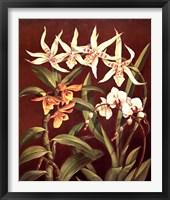 Framed Orchid Trio I