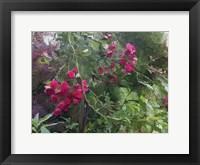 Framed Monets Garden