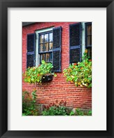 Country Store Window Flowers Framed Print