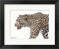 Framed Passing Leopard
