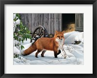 Framed Fox and Barn