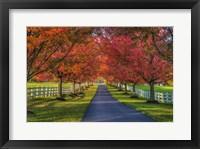 Framed Lane in Fall