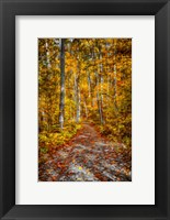 Framed Ohiopyle Path