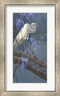 Framed Egret in Wisteria