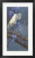 Framed Egret in Wisteria