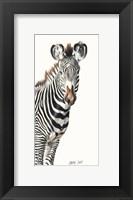Framed Grevvy's Zebra