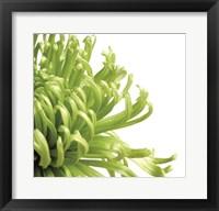 Framed Green Bloom 2 (detail)
