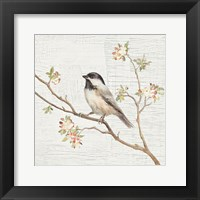 Framed Black Capped Chickadee Vintage
