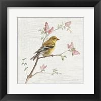 Framed Female Goldfinch Vintage