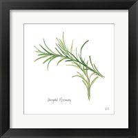Framed Variegated Rosemary