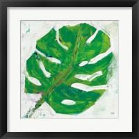 Framed Single Leaf Play on White