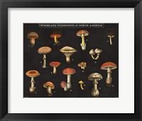 Framed Mushroom Chart I