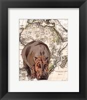 Framed African Hippo
