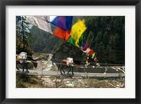 Framed Mule train on trail to Namche Bazaar, Larja Bridge, Khumbu, Nepal