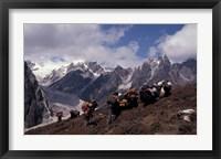 Framed Yak Drivers Above the Kangshung, Tibet