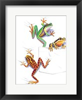 Framed Three Frogs