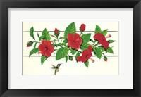 Framed Hibiscus Hummer