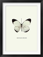 Framed White Butterfly
